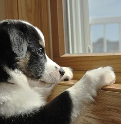 čeká pes