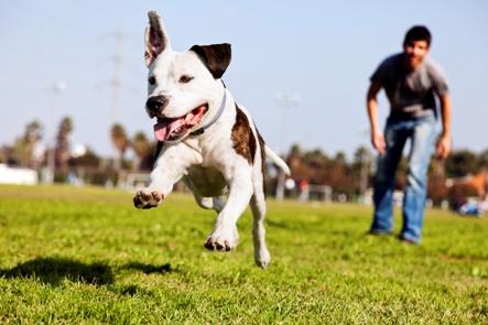 Použití a navykání psa na neviditelný plot D-fence