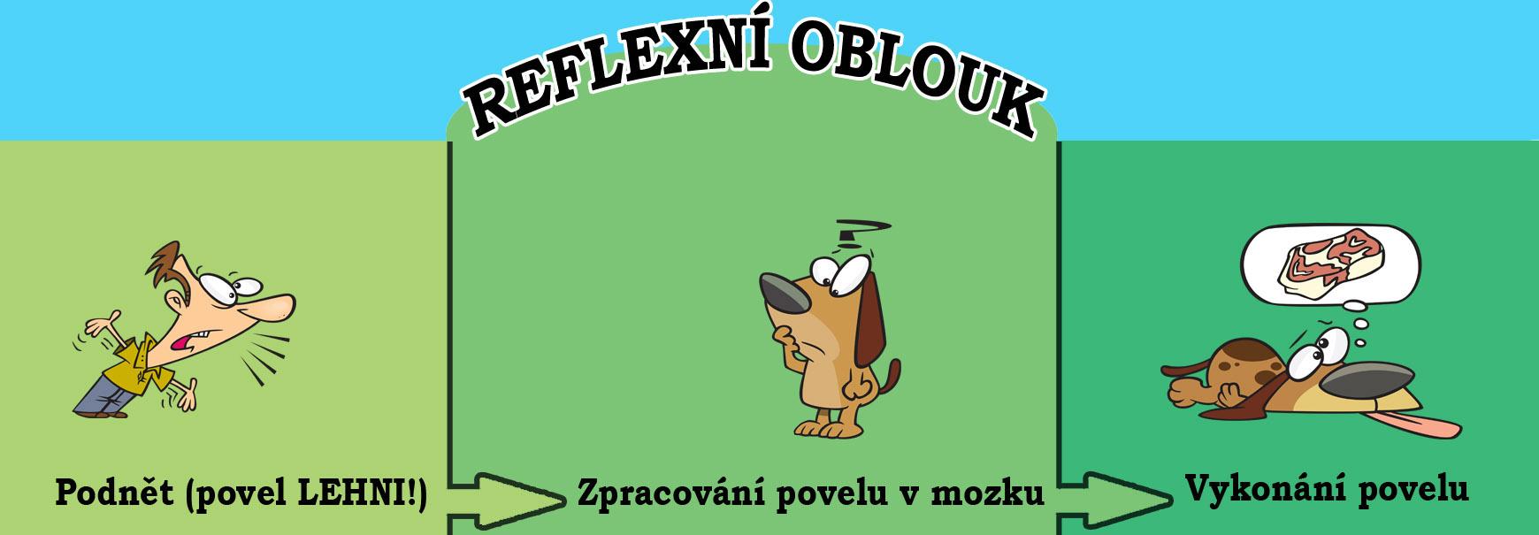 Reflexní oblouk psa – co to vlastně je?