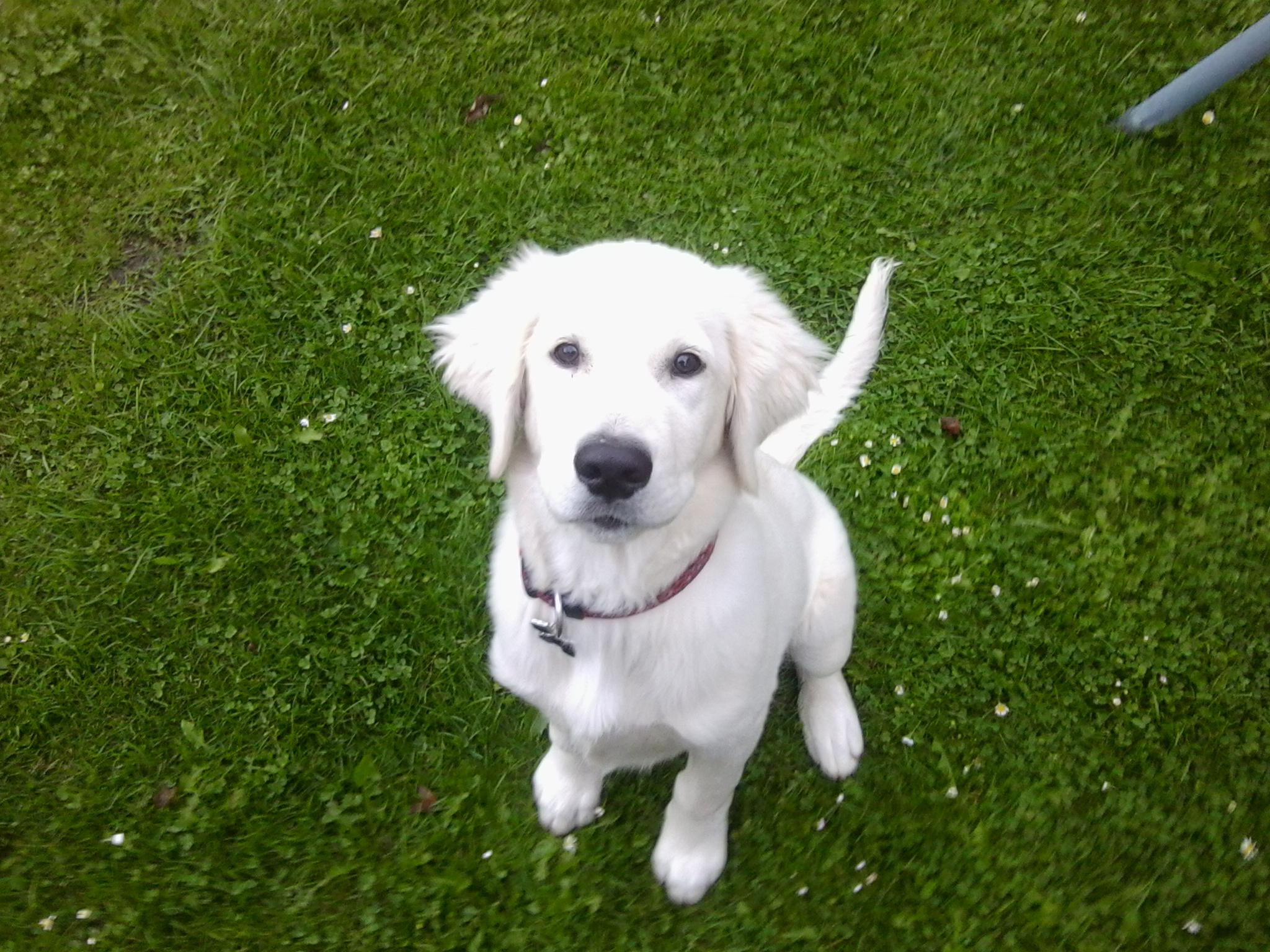 Náš pes COUDY a zkušenost s neviditelným plotem